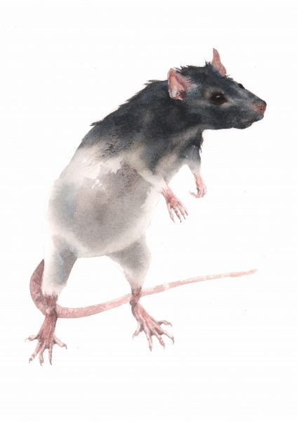 Rat Painting Watercolour