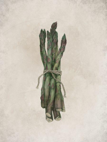 asparagus colour (5)