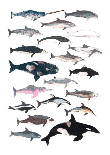 cetacean-1500-high