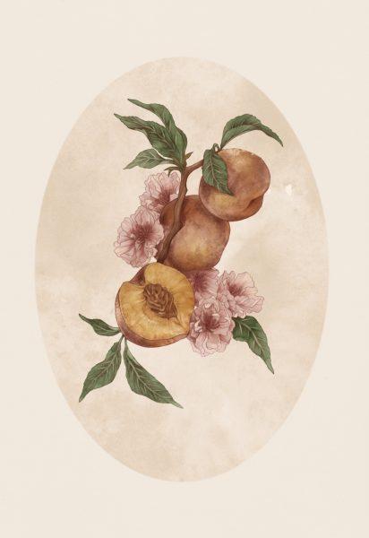 White Peach (prunus persica)