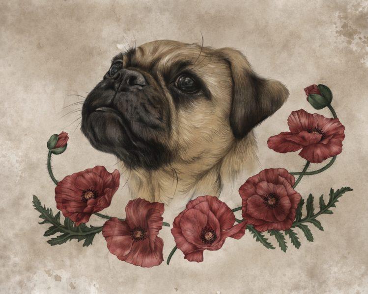 Poppy the Pug