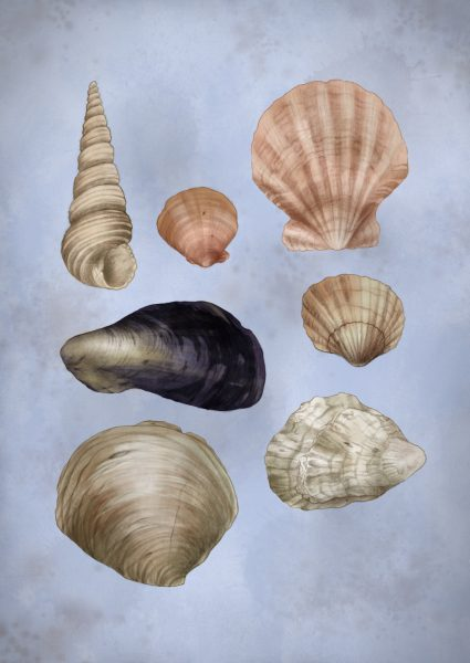 British Seashell Scavenger Hunt