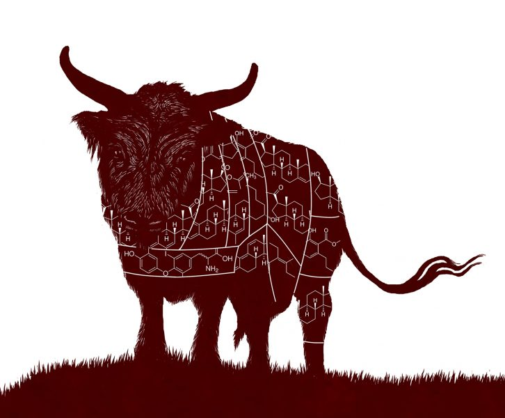 Hormone Fed Livestock