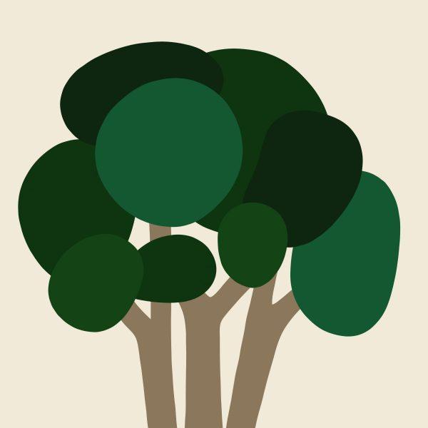 Cyrpus Tree