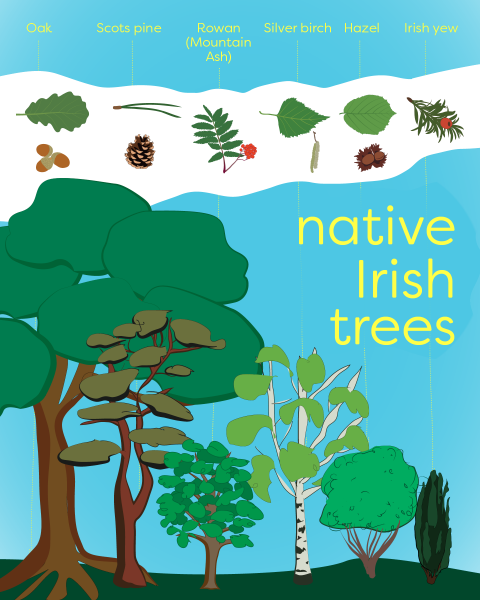 IRISH NATIVE TREES