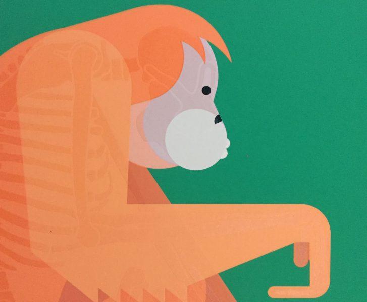 Orangutan-Crop