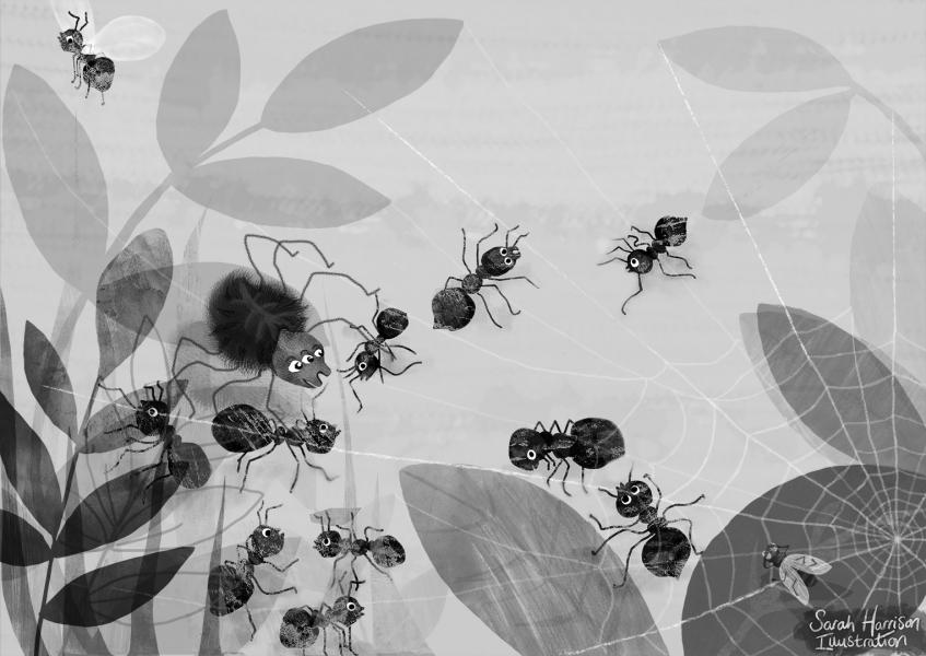 Spider's Web(B&W) - ©SarahHarrisonIllustration.jpg