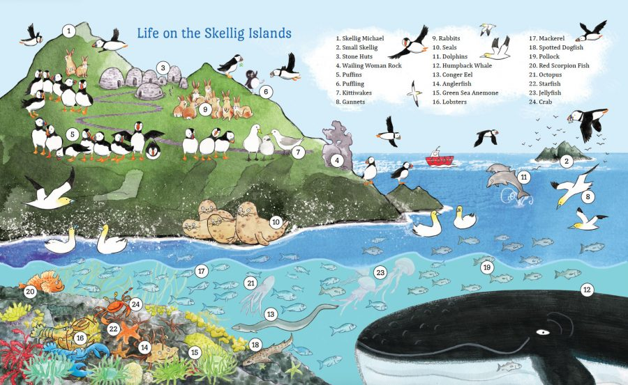 'Where Are you, Puffling?' - Life on the Skellig Islands