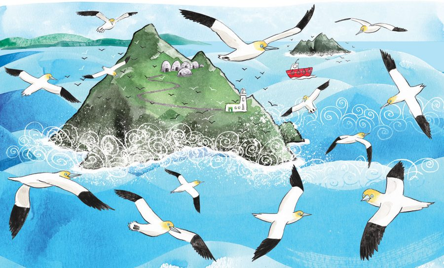 'Where Are You, Puffling?' - The Skellig islands