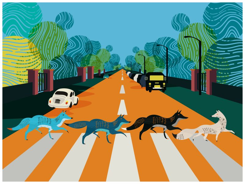 Abbey Road Foxes