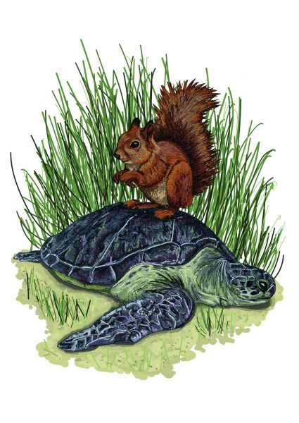 Squirrel and Turtle