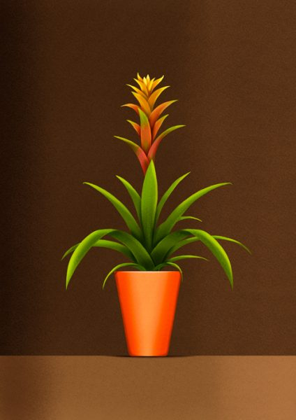 The Plants Series - Bromelia Guzmania