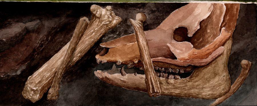 stonehenge pig bones
