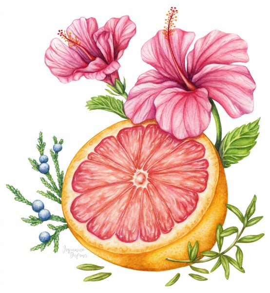 Packaging illustration for Oshlag (Hibiscus gin)