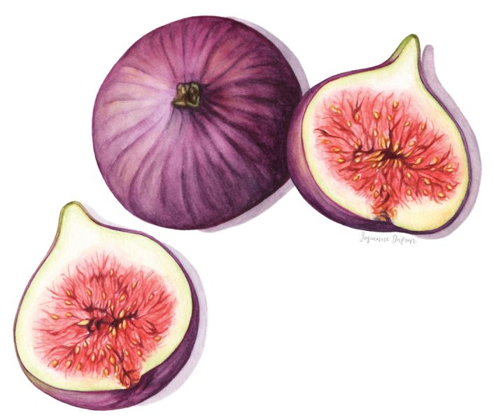 Figs illustration for E.Leclerc