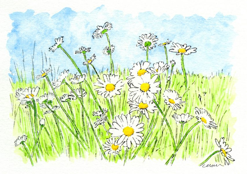 March of the Daisies i