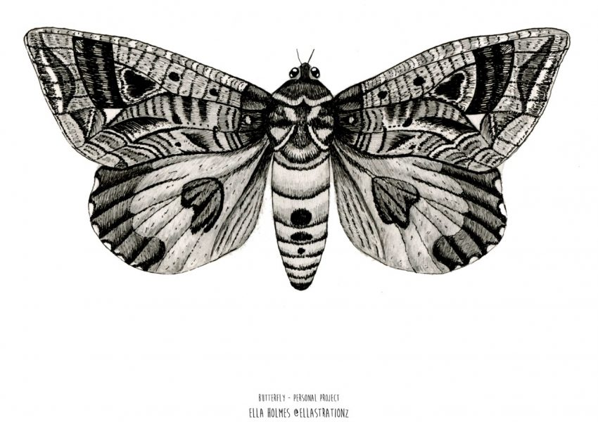 thumbnail_butterflyportfolio