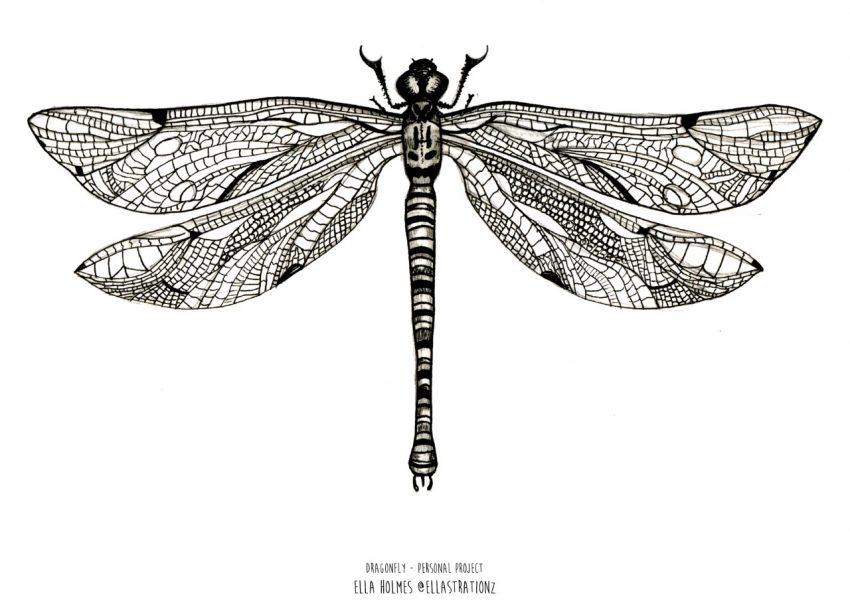 thumbnail_dragonflyportfolio