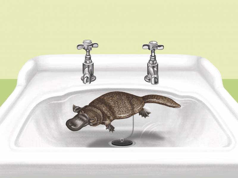 Platypus Sink