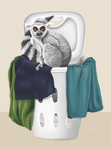 Lemur Basket