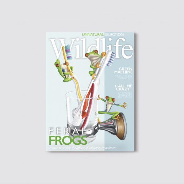 Frog Brushes Wildlife Magazine