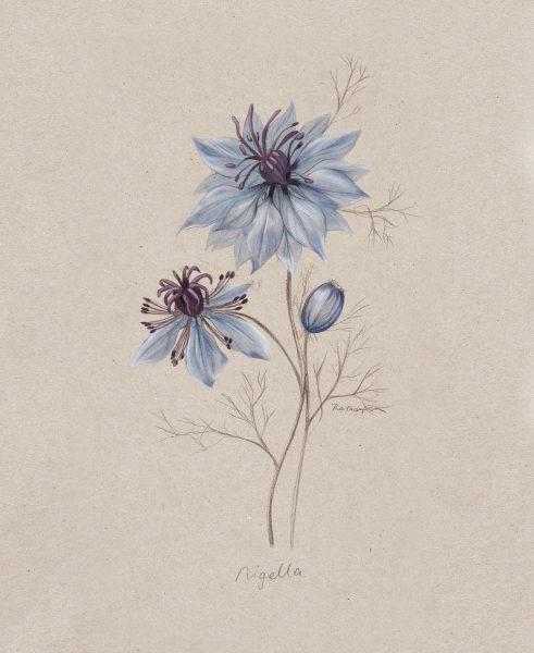 Nigella NZ Home and Garden Magazine