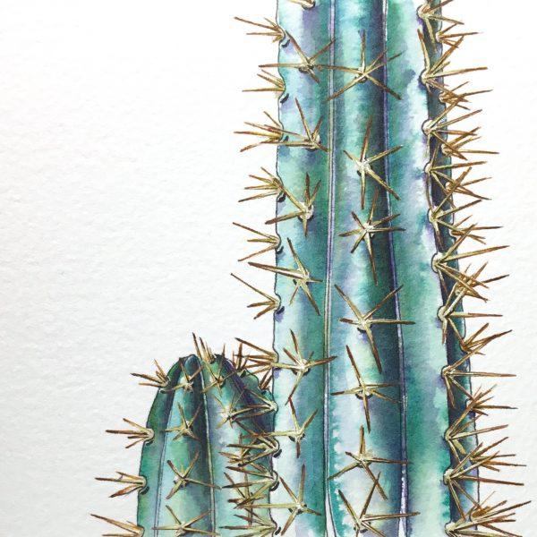 Blue Column Cactus