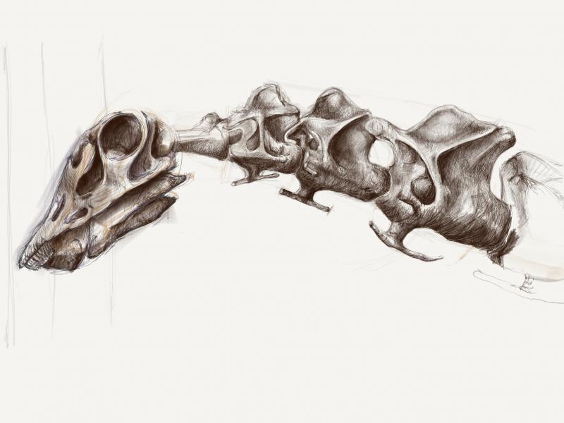 dippy dinosuar