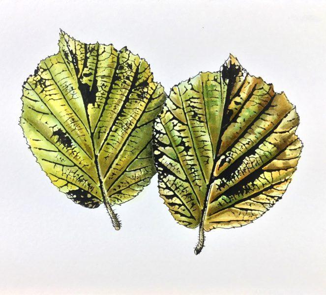 green hazel leaves 2