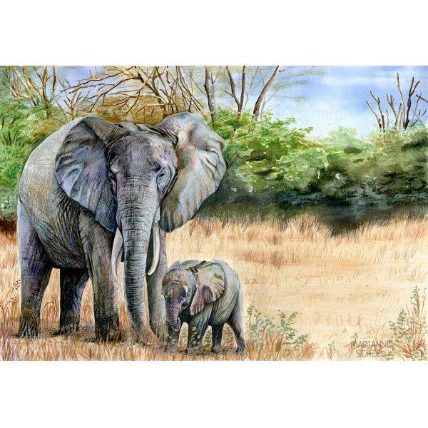 elefant med unge
