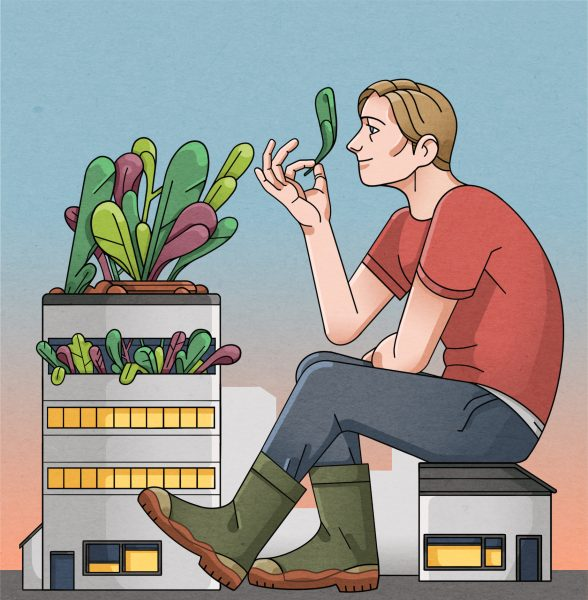 'On rooftops and in tunnels, city farms lead food revolution'