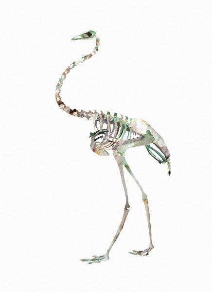Birds and Bones