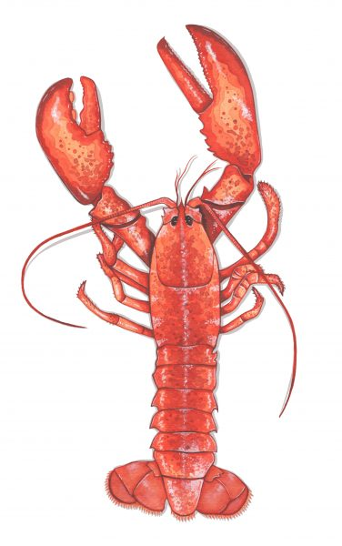 Lobster illustration for Style of Wight magazine