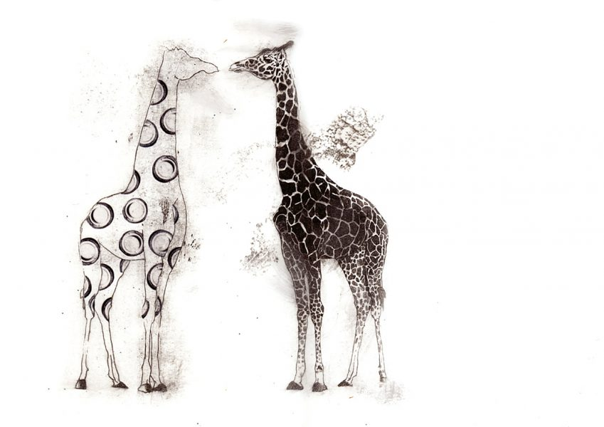giraffe_1250