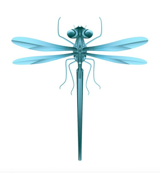 xavier-segers-dragonfly