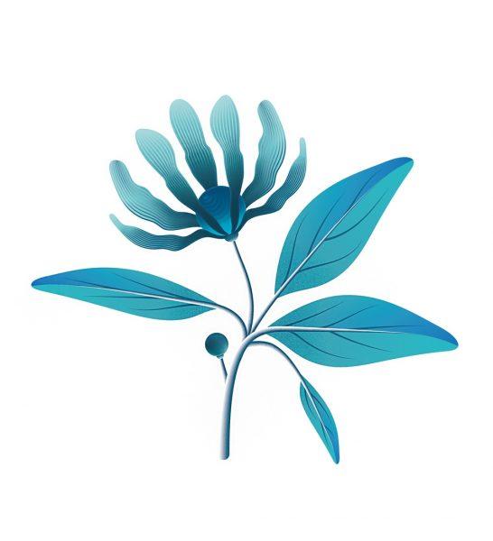 xavier-segers-flower