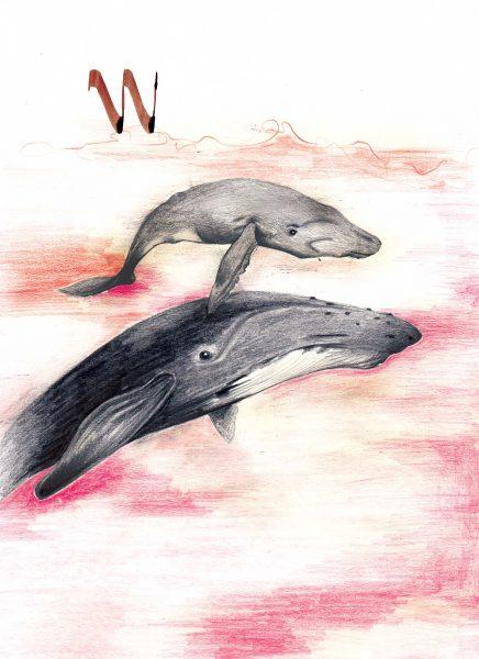 Whale-Blue