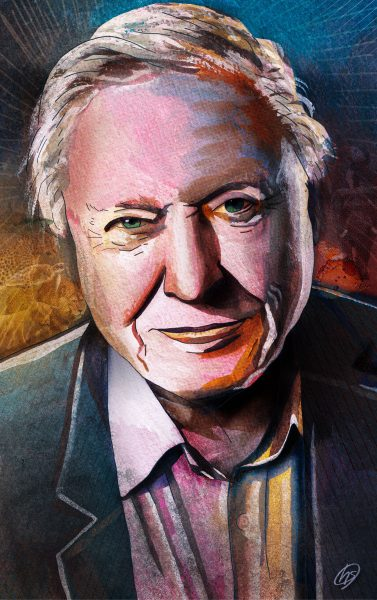 david-attenborough-illustration
