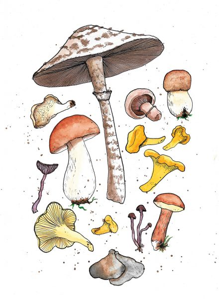mushrooms web