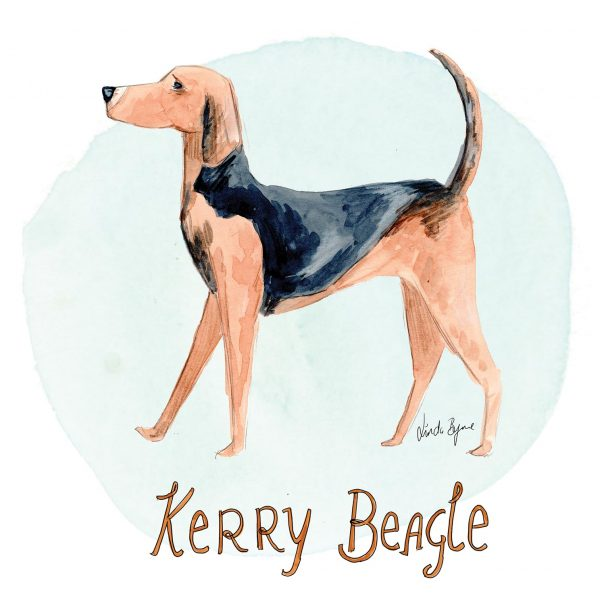 Editorial license artwork Irish Dog Breeds Kerry Beagle