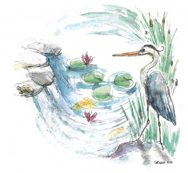 Il laghetto, elemento importante per la natura e lo spirito