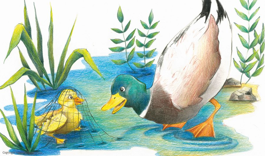 childrens-book-illustrator-riverfriends-4