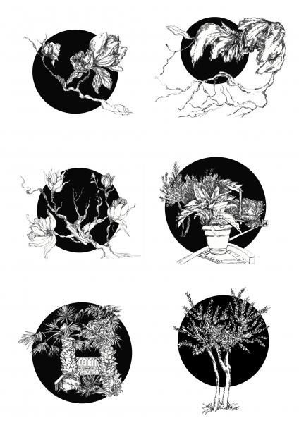 10.-Botanical