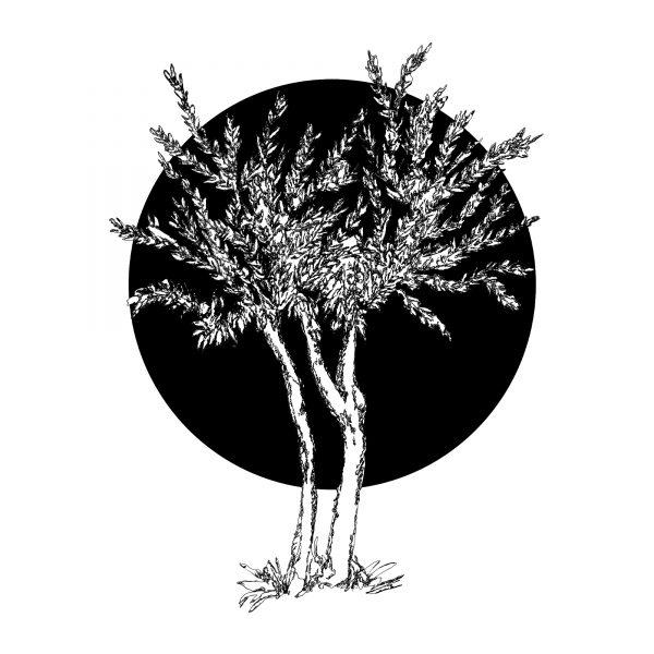 5.Olive Tree