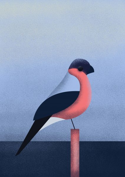 Bullfinch - Personal Series Project