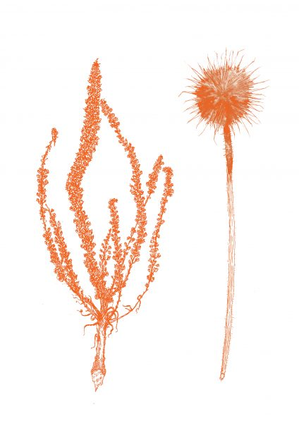 Orange Dried Plants