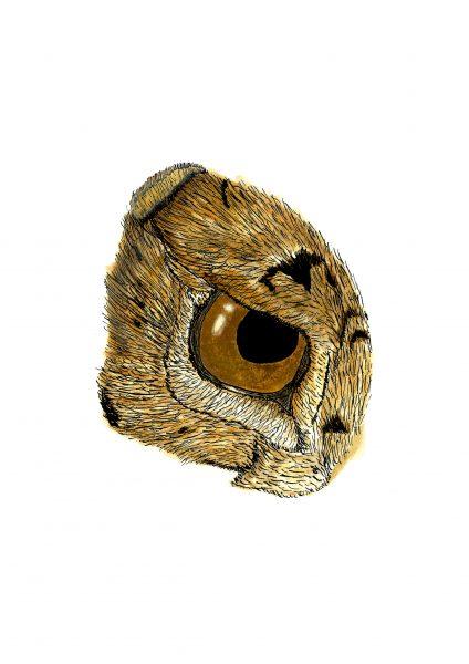 Rabbit eye