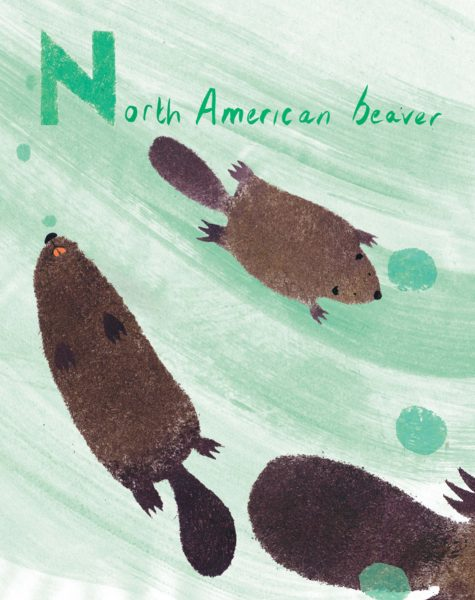 Beavers Canadian Animal Alphabet