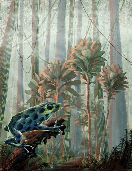 exploring the jungles