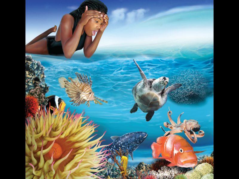 Sea Wonders